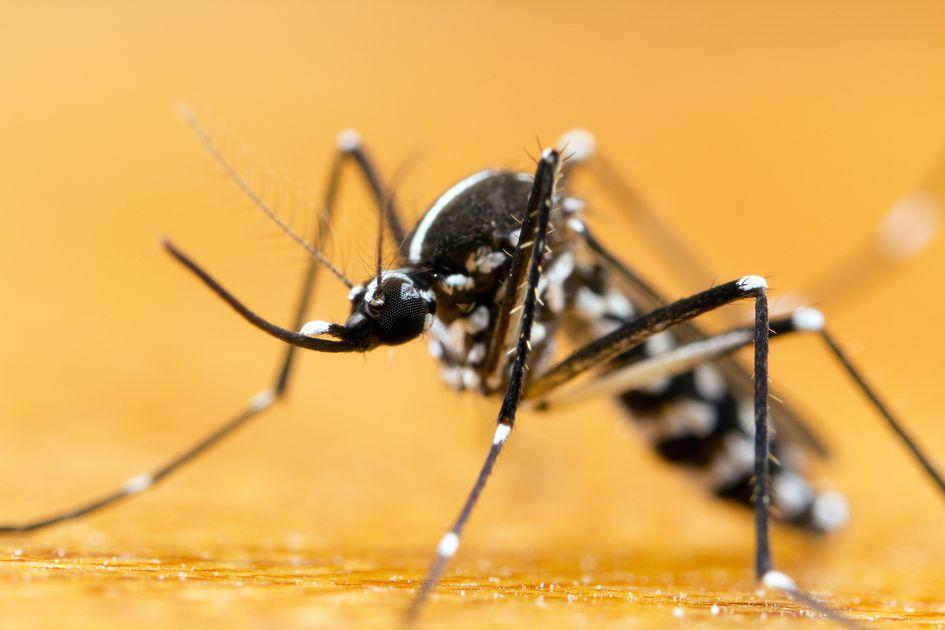 Un dispositif de signalement des moustiques a été lancé par @BxMetro, en partenariat avec le Centre de Démoustication, qui étudie chaque cas et vous dispense de conseils et aide afin de vous en débarrasser. + d'infos dans notre article complet par ici 👇lormont.fr/actualites-109…